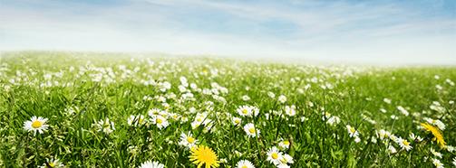 Kraftort Blumenwiese