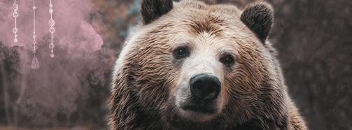 Krafttier Braunbär