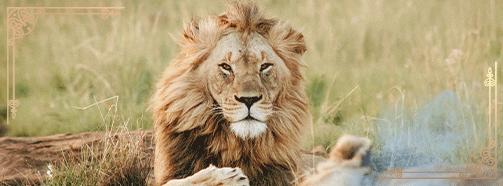 Krafttier Löwe